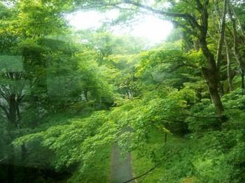 ホテルの庭緑.jpg